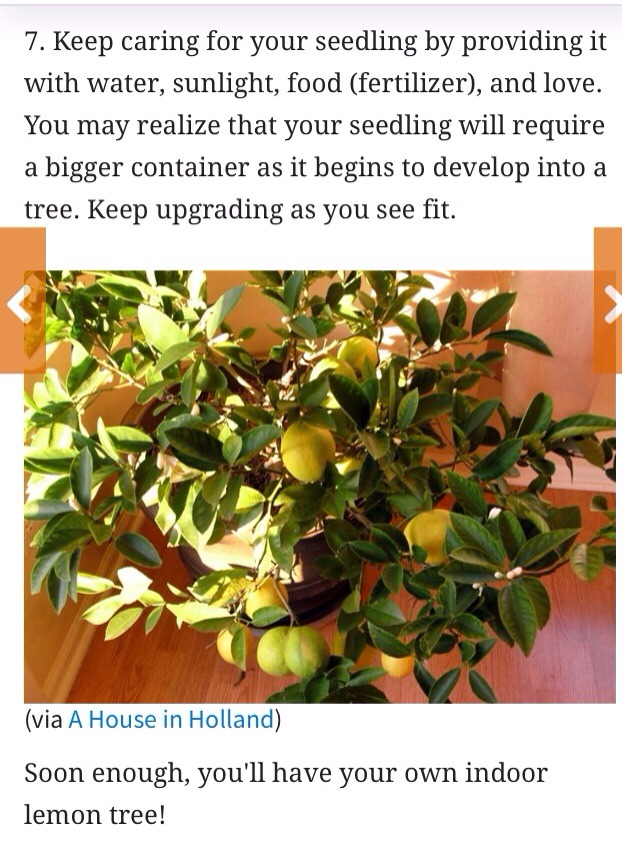 how to grow a lemon tree from seed inside