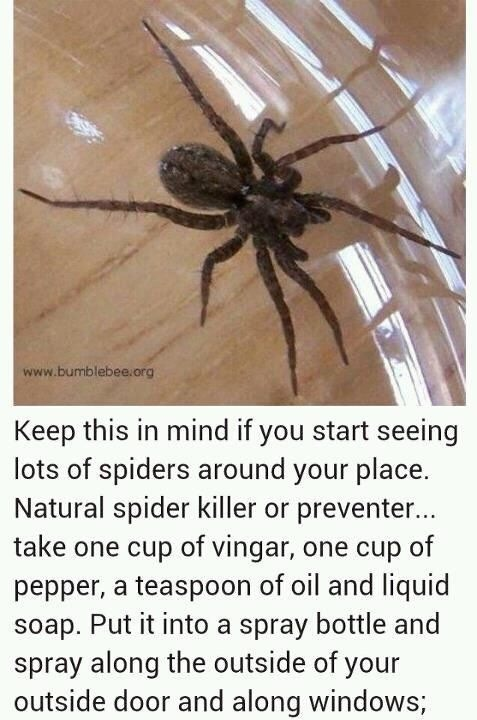 Natural spider killer and preventer trusper for How to stop spiders entering your house