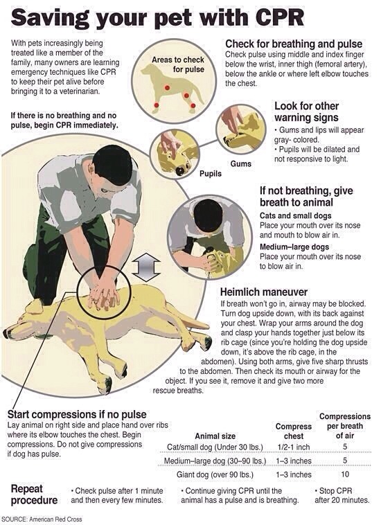 PET CPR - emergency Home