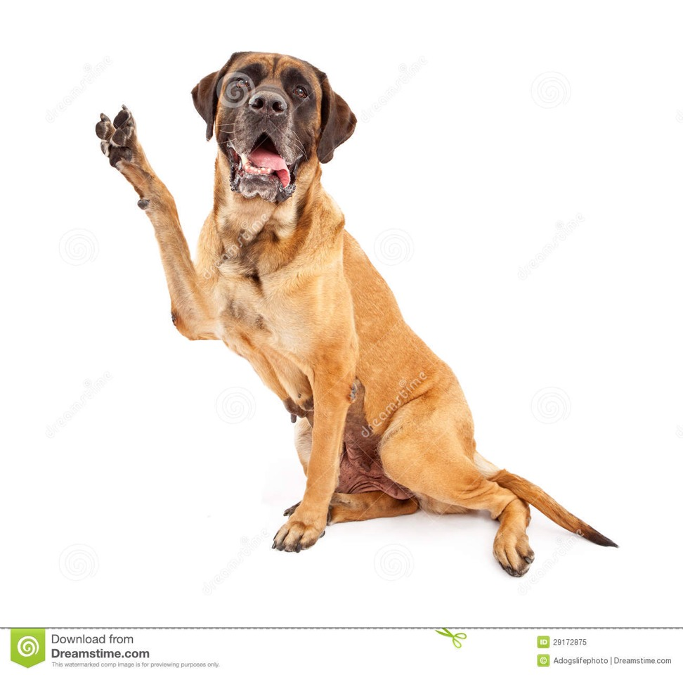 Dog Biting Rugs: Does Your Dog Ever Bite At His Feet Or Chew His Nails