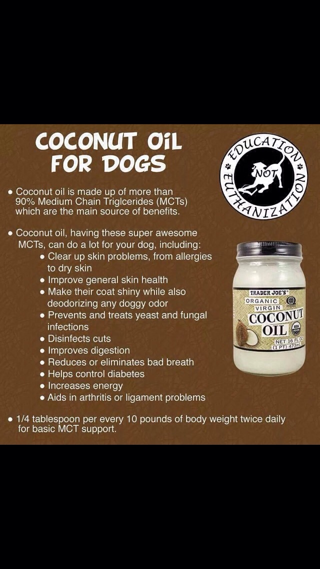 Coconut Oil Helps Dogs Ears When Trusper