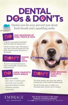 Useful Info For The Dog Owners