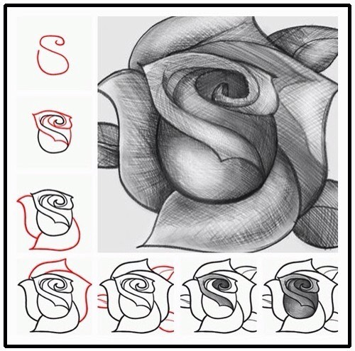 How To Draw A Rose🌹