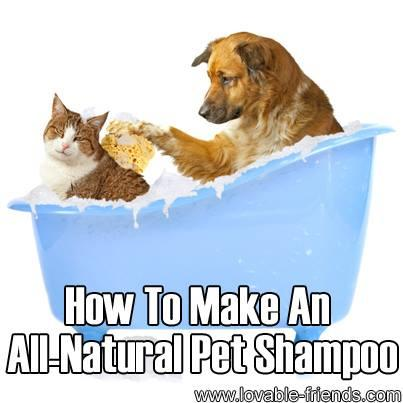 How To Make Your Own Dog Flea Shampoo