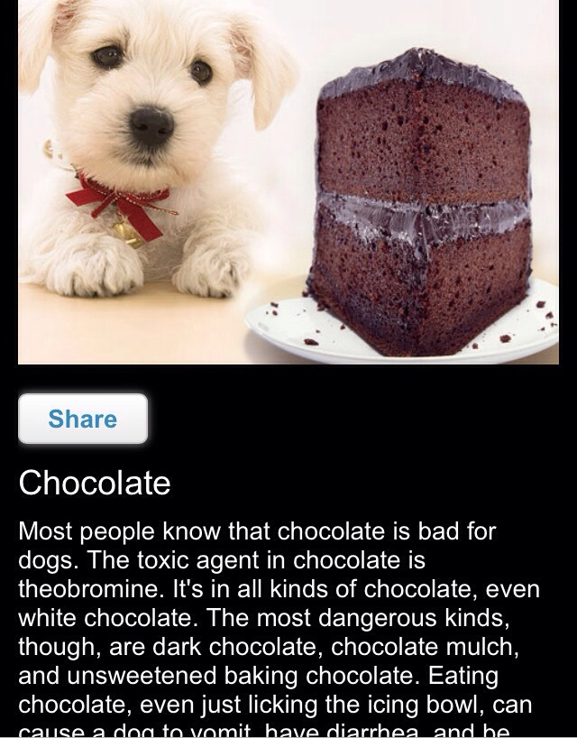 Can U Give Dogs White Chocolate