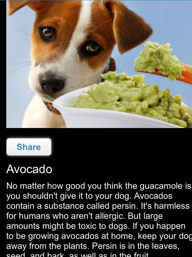 Is Alchohol In Small Amounts Bad For Dogs