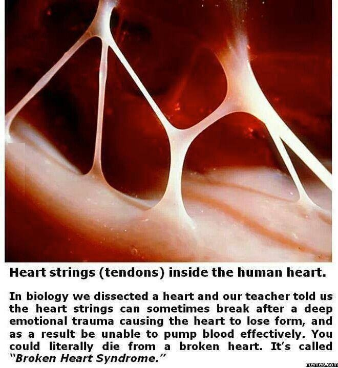 cause and effect of losing a loved one The loss of a loved one is an incredibly stressful, life-altering  though there are  rare cases of death caused by broken heart syndrome  hormone, and reduced  levels of dhea, a hormone that balances the effects of cortisol.