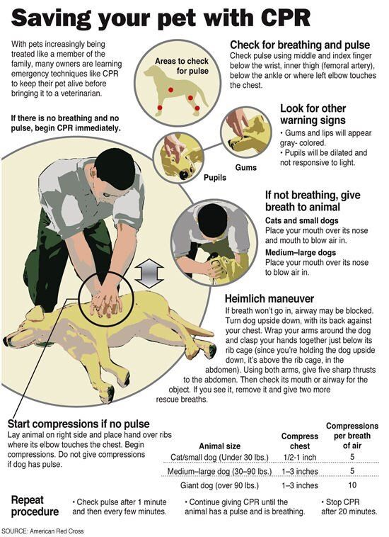 GREAT TIP THAT CAN SAVE YOUR DOG'S LIFE!!