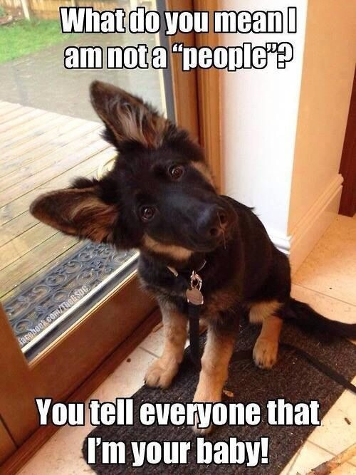 💢💥FUNNY PET PICTURES😁💥💢