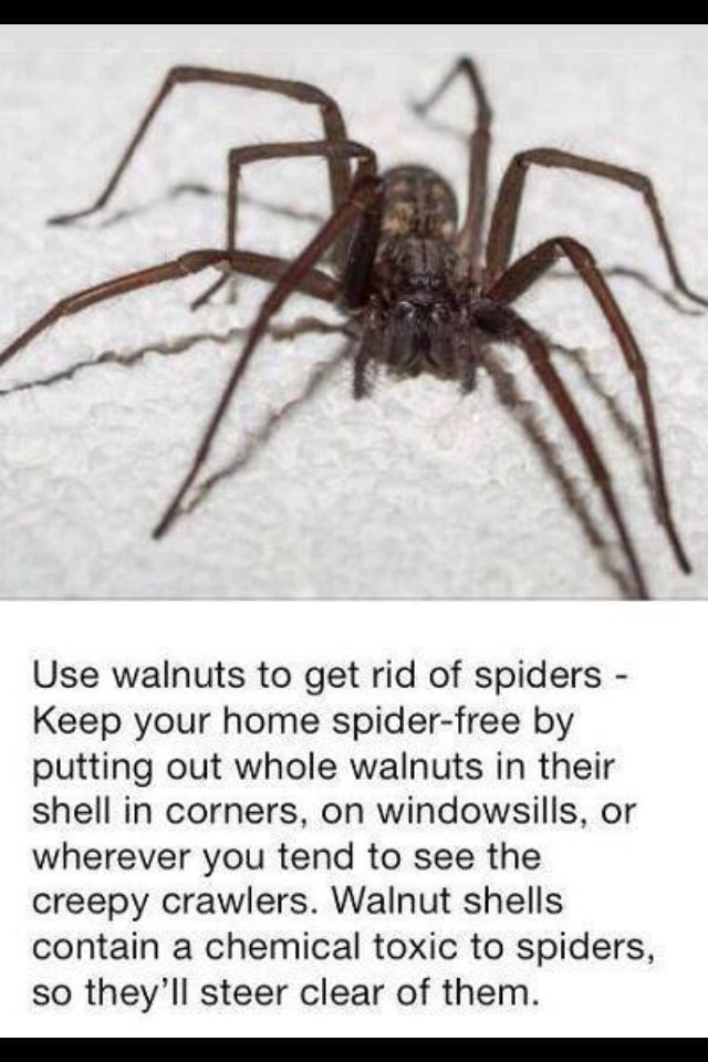 how to get rid of all spiders