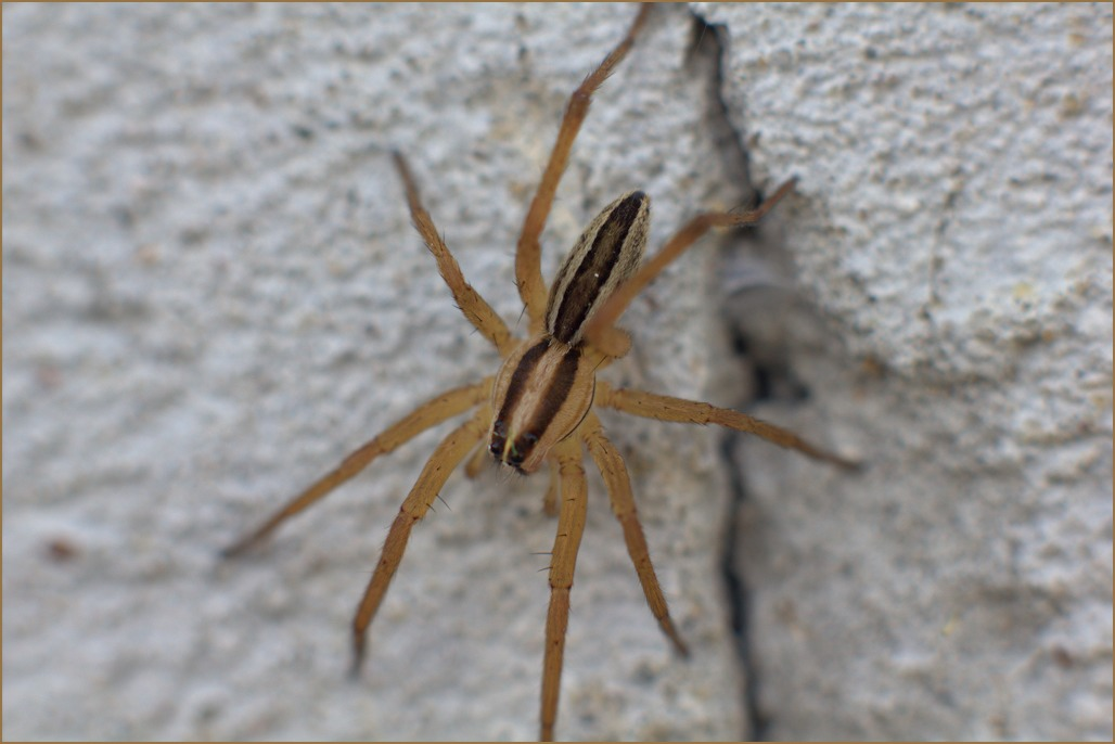 How to get rid of spiders in your home trusper for How to get rid of spiders in the house uk