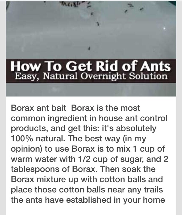 Get Rid Flying Ant Infestation, Natural Way To Get Rid Of