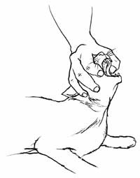 ✨How To Save A Chocking Cat✨👏