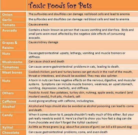 Foods Dogs Can Eat Uk