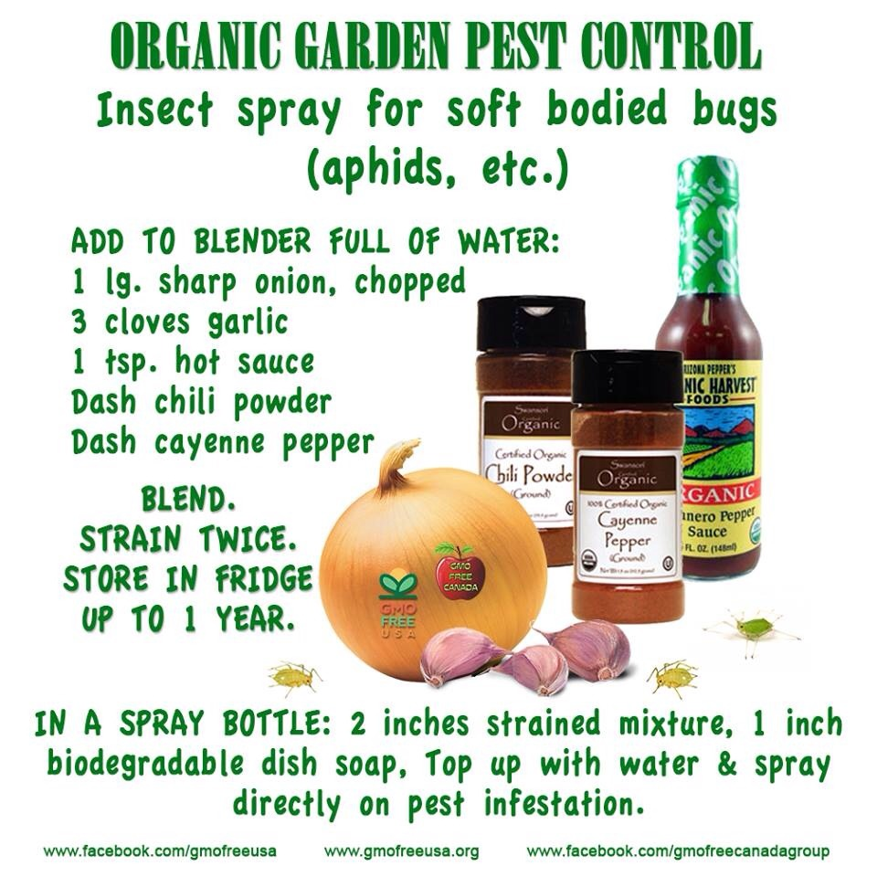 Organic Garden Pest Control Recipe