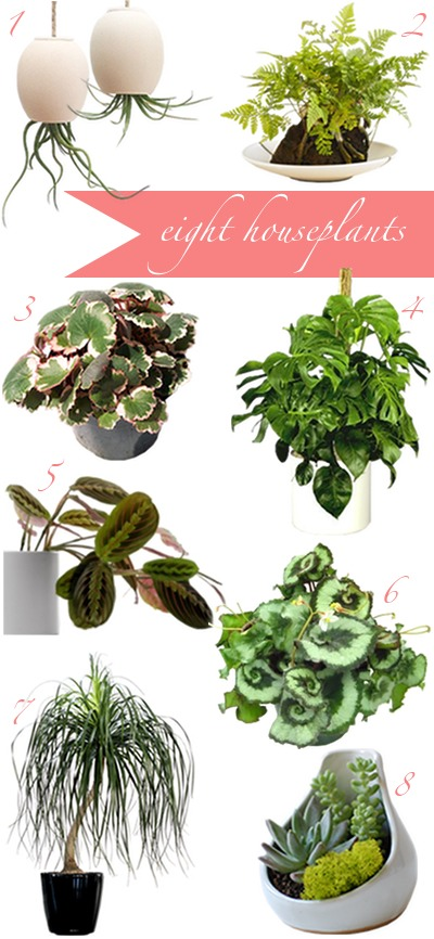 8 house plants easy to care for trusper for Easy care indoor plants
