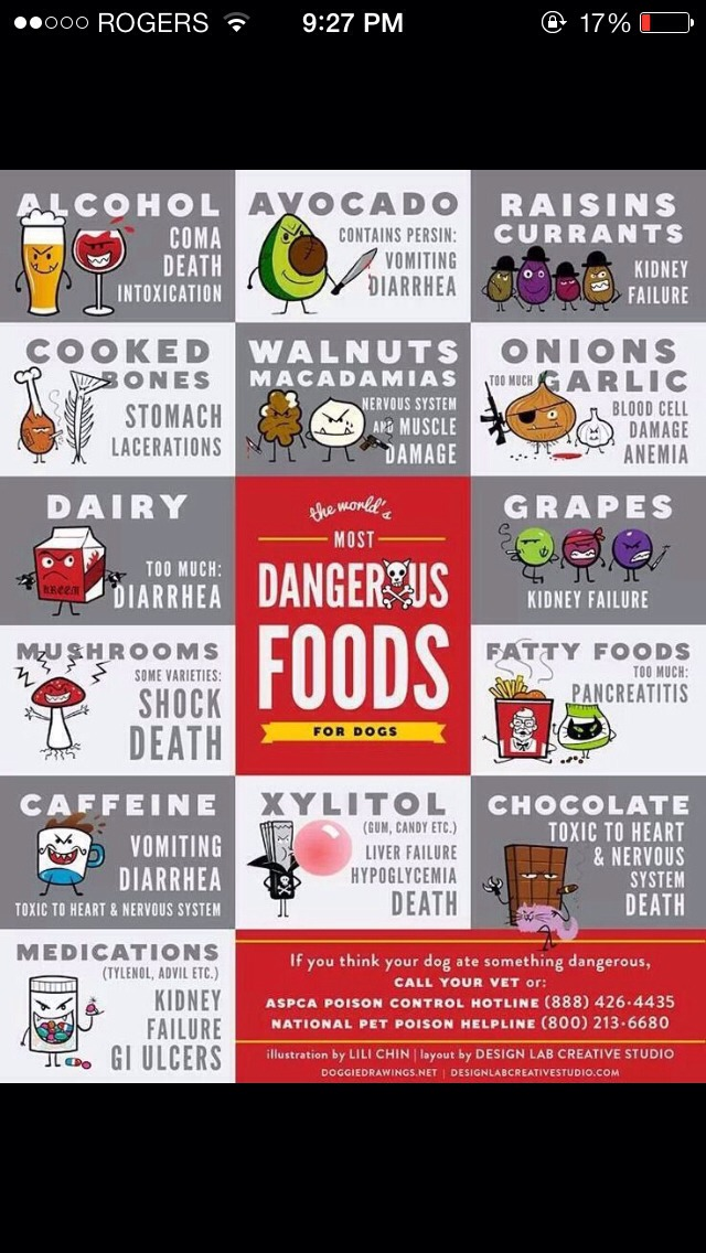 Bad Foods For Dogs Chart